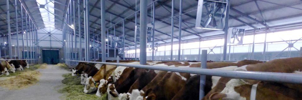 Aufstallung, Tränkesystem, Gülletechnik, Lüftung für Kühe, Rinder- und Kälberaufzucht