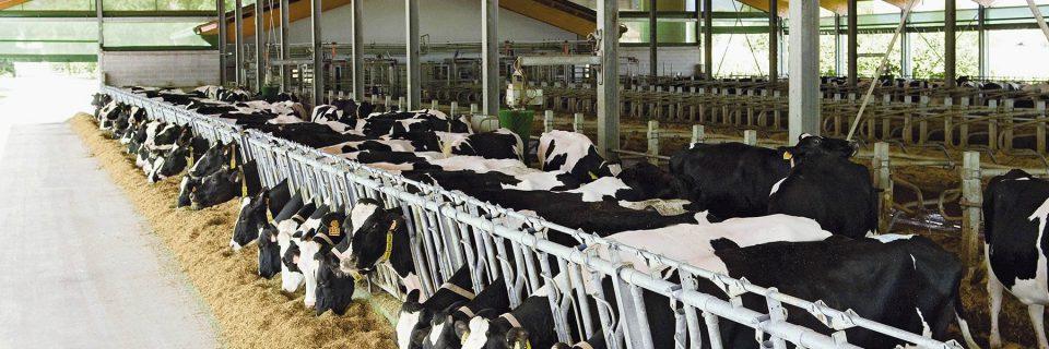 стойловое оборудование, системы поения и вентиляции, навозоудаление, разведение коров и выращивание молодняка